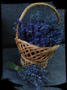 cosulet cu flori de lavanda proaspat culeasa