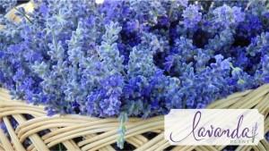 cosulet cu flori de lavanda