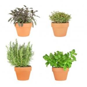 Ghivece cu plante medicinale si aromatice