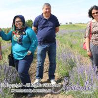 Lavanda Plant Craiova - LAVENDER PLANT Craiova ROMANIA with Lavender Indonesia