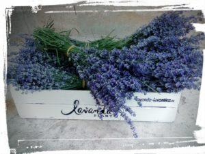 buchete lavanda - by Lavanda Plant Craiova - Fresh lavender bouquets