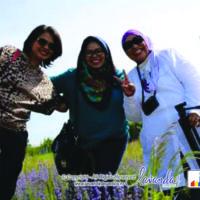 lavanda-plant-craiova-lavender-plant-craiova-romania-with-lavender-indonesia-dina-nurbintoro